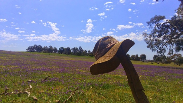 Barossa Valley Lavender Field_South Australia