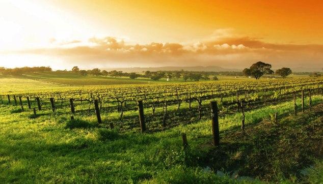 Mudgee Wine Region Vineyard