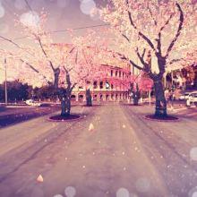 Sakura_CherryBlossomInRome_Google_CuriousAbout
